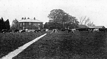 Heath Farm Dairy and the St Albans Military Tribunal | St Albans Central Library (ref. Y234.23)