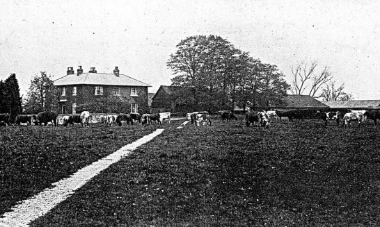 Heath Farm Dairy and the St Albans Military Tribunal