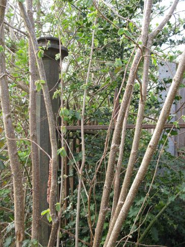 Fig. 3: part of remaining fencing around former Sisters Hospital site with finely worked fence post. | Elizabeth Rolfe